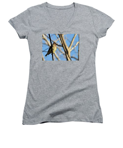 Cedar Wax Wing Women's V-Neck T-Shirt (Junior Cut) by David Arment