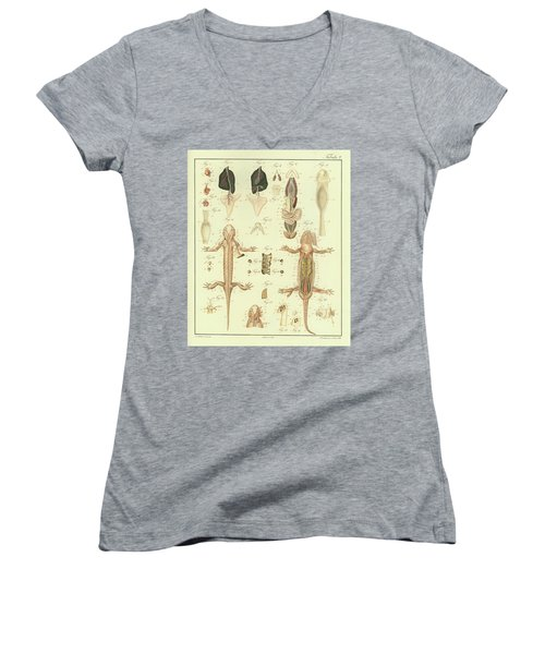 Fire Salamander Anatomy Women's V-Neck T-Shirt