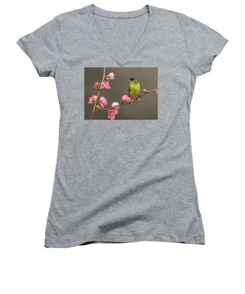 Women's V-Neck T-Shirt (Junior Cut) featuring the photograph Lesser Goldfinch by Doug Herr