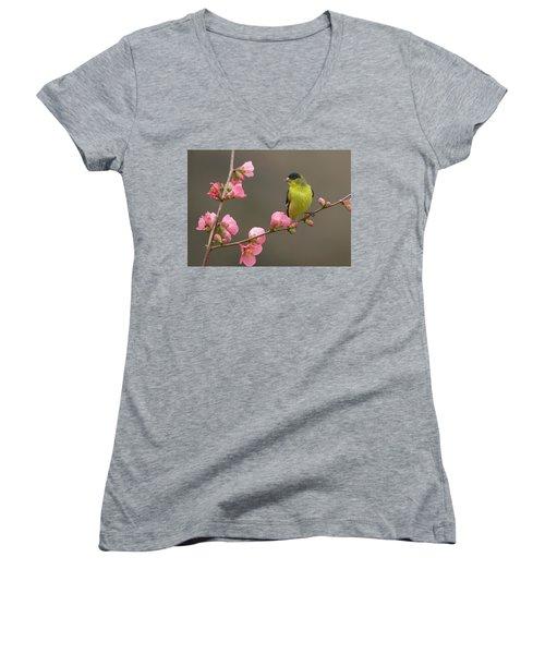 Lesser Goldfinch Women's V-Neck T-Shirt (Junior Cut)