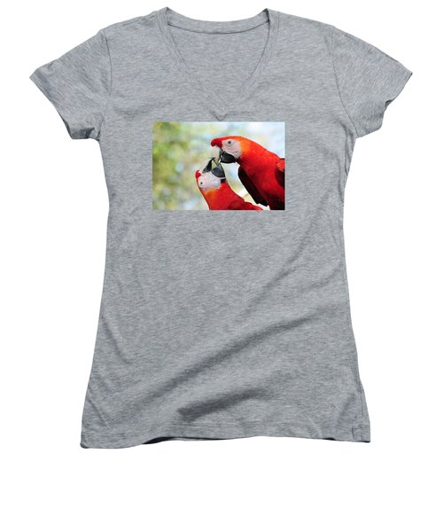 Macaws Women's V-Neck (Athletic Fit)