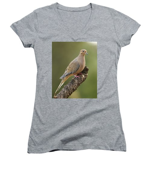 Women's V-Neck T-Shirt (Junior Cut) featuring the photograph Mourning Dove by Doug Herr