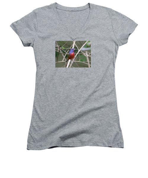 Painted Bunting Women's V-Neck (Athletic Fit)