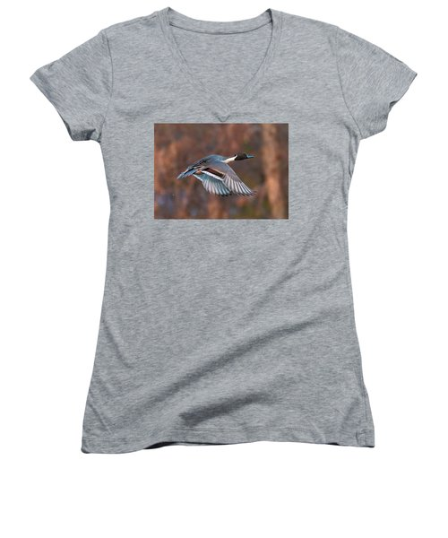 Women's V-Neck T-Shirt (Junior Cut) featuring the photograph Pintail  by Kelly Marquardt