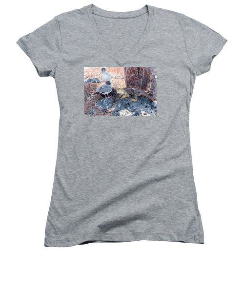 Swallow Tailed Gull And Iguana On  Galapagos Islands Women's V-Neck T-Shirt