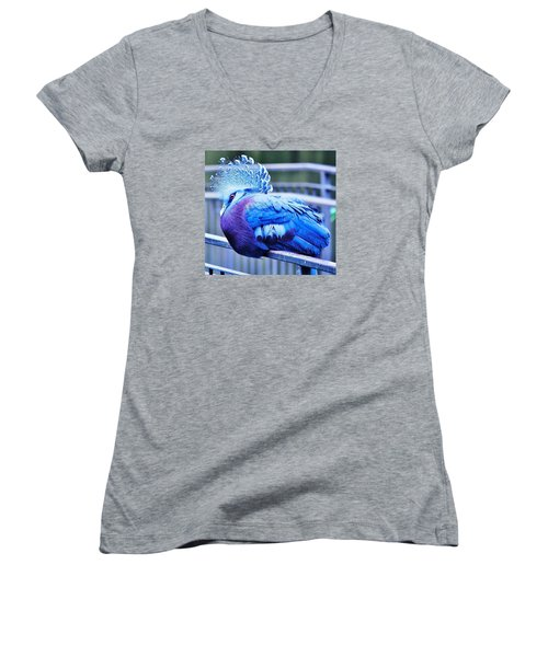 Women's V-Neck T-Shirt (Junior Cut) featuring the photograph Victoria Crowned Pigeon by Al Fritz