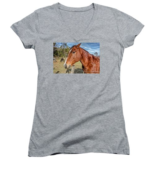 Women's V-Neck T-Shirt (Junior Cut) featuring the photograph Wild Horse In Smoky Mountain National Park by Peter Ciro
