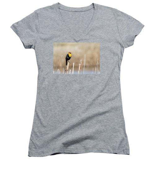 Yellow Headed Blackbird Women's V-Neck