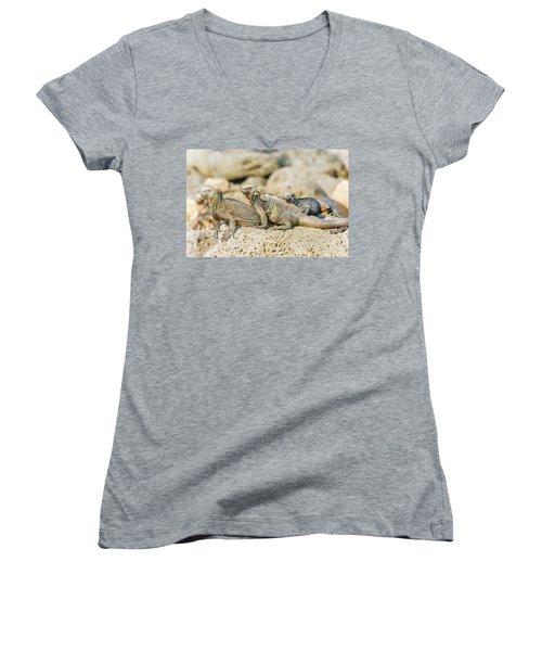 Marine Iguana On Galapagos Islands Women's V-Neck T-Shirt (Junior Cut) by Marek Poplawski