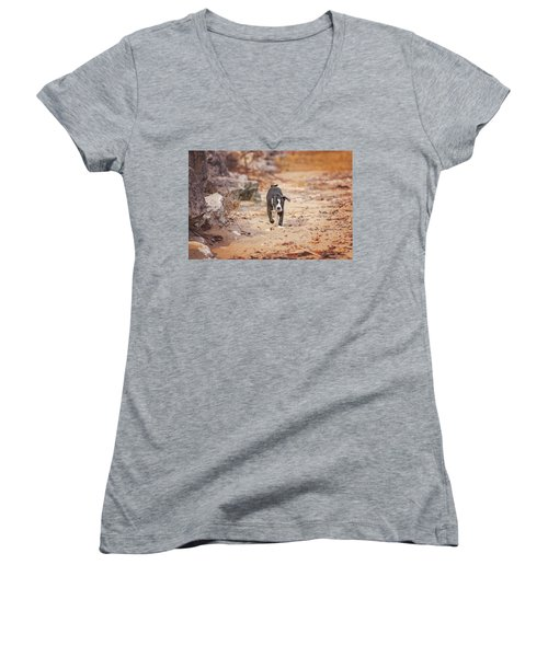 Women's V-Neck T-Shirt featuring the photograph American Pitbull  by Peter Lakomy