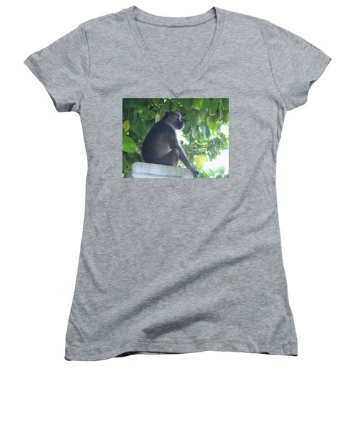 Baboon Sits Guard  Women's V-Neck (Athletic Fit)