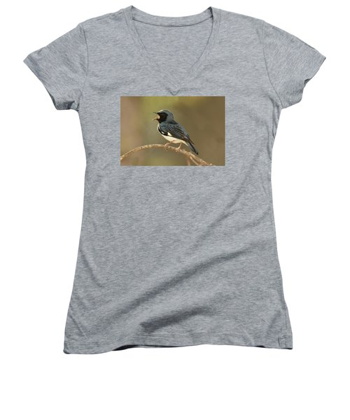 Black-throated Blue Warbler Women's V-Neck (Athletic Fit)
