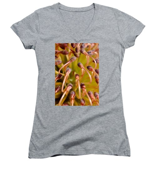 Common Pincushion Protea Women's V-Neck T-Shirt (Junior Cut) by Werner Lehmann