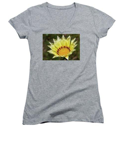 Gazania Petals Women's V-Neck T-Shirt