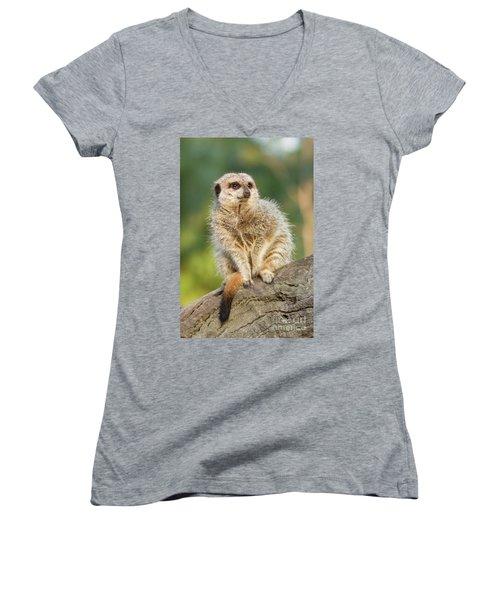 Meerkat Women's V-Neck T-Shirt (Junior Cut) by Craig Dingle