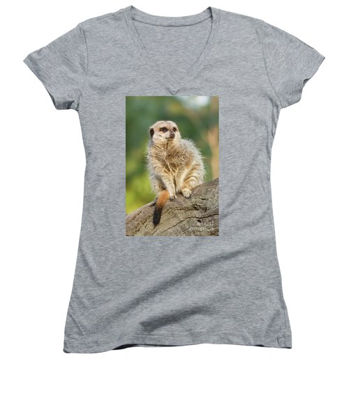 Meerkat Women's V-Neck (Athletic Fit)