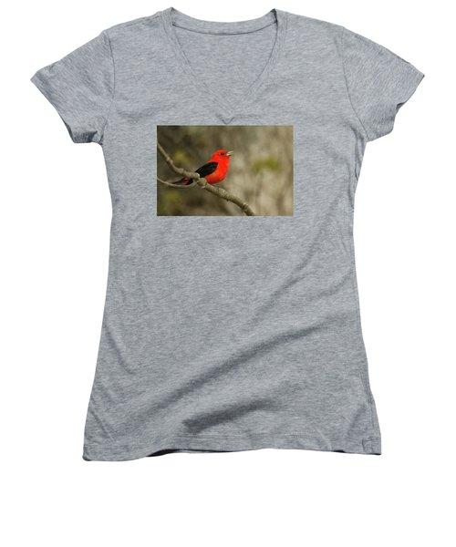 Scarlet Tanager Women's V-Neck T-Shirt (Junior Cut) by Alan Lenk