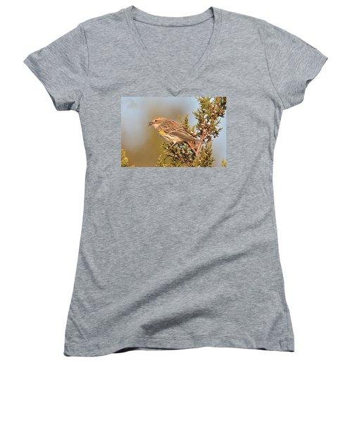 Yellow-rumped Warbler Women's V-Neck T-Shirt (Junior Cut) by Alan Lenk