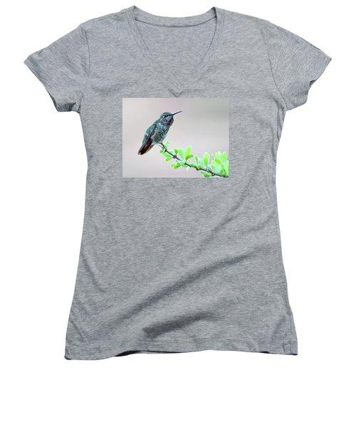 Anna's Hummingbird Women's V-Neck (Athletic Fit)
