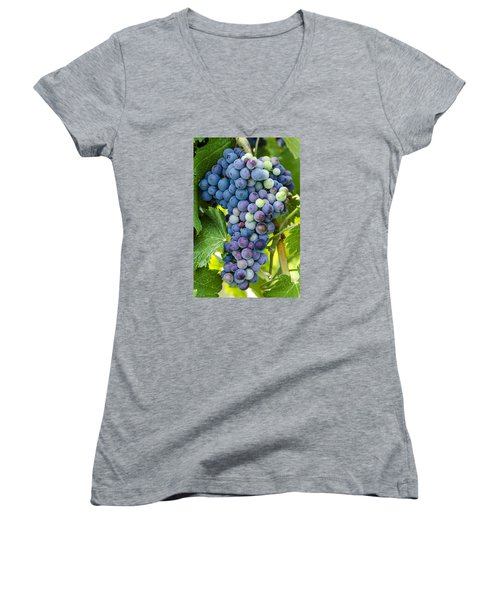 Red Wine Grapes Women's V-Neck T-Shirt (Junior Cut) by Teri Virbickis