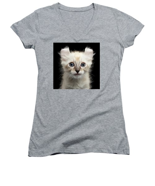 Cute American Curl Kitten With Twisted Ears Isolated Black Background Women's V-Neck T-Shirt (Junior Cut) by Sergey Taran