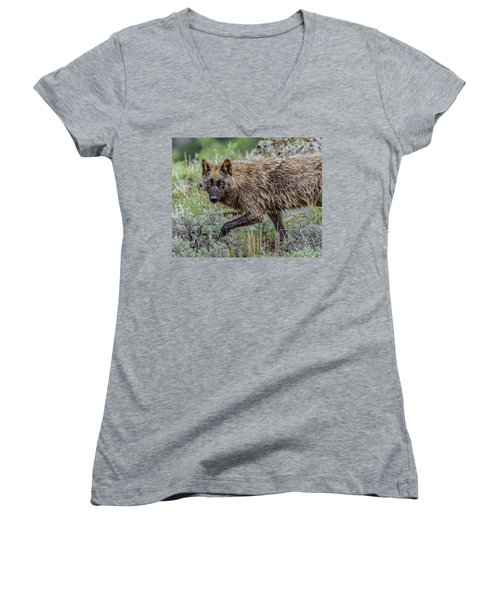 Women's V-Neck T-Shirt (Junior Cut) featuring the photograph A Star In Lamar by Yeates Photography