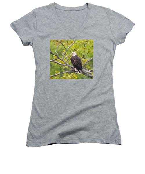 Adult Bald Eagle Women's V-Neck T-Shirt (Junior Cut) by Debbie Stahre