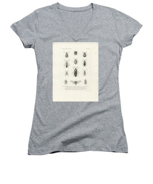 African Bugs And Insects Women's V-Neck