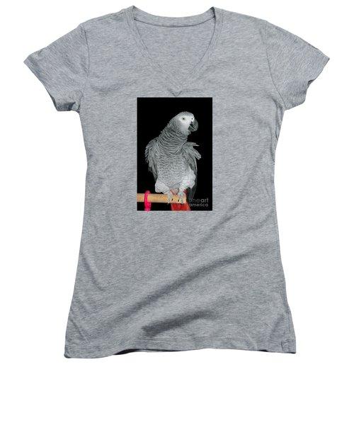 African Grey Parrot Women's V-Neck T-Shirt