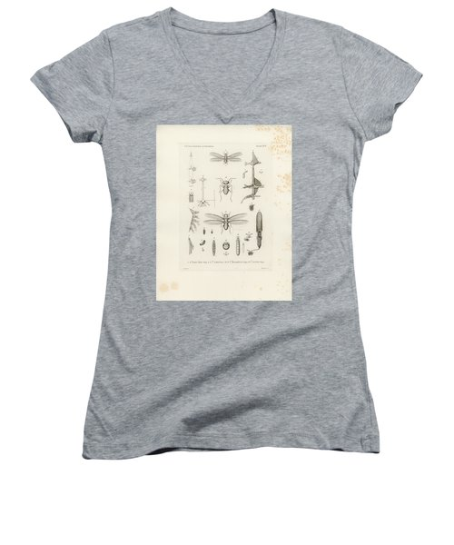 African Termites And Their Anatomy Women's V-Neck (Athletic Fit)