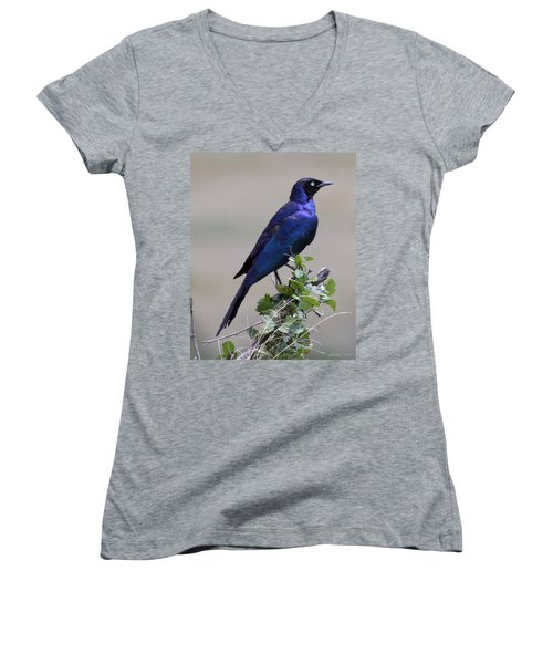 African White Eye Starling Women's V-Neck (Athletic Fit)