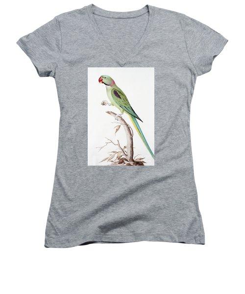 Alexandrine Parakeet Women's V-Neck T-Shirt (Junior Cut) by Nicolas Robert