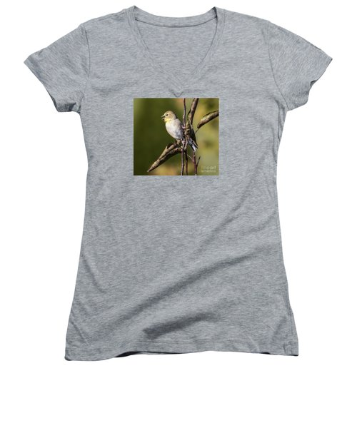 Women's V-Neck T-Shirt (Junior Cut) featuring the photograph American Goldfinch In Fall Colors  by Ricky L Jones