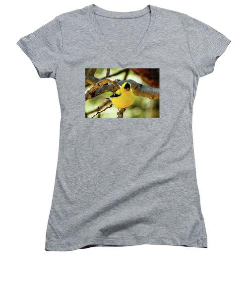 American Goldfinch On Aspen Women's V-Neck T-Shirt (Junior Cut) by Marilyn Burton