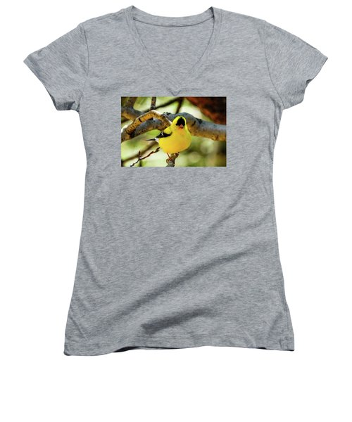 American Goldfinch On Aspen Women's V-Neck (Athletic Fit)