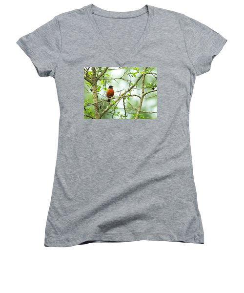American Robin On Tree Branch Women's V-Neck