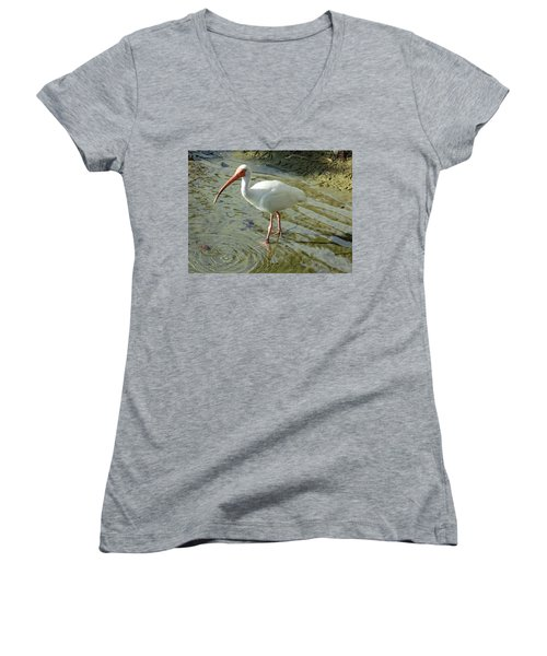 American White Ibis Women's V-Neck T-Shirt