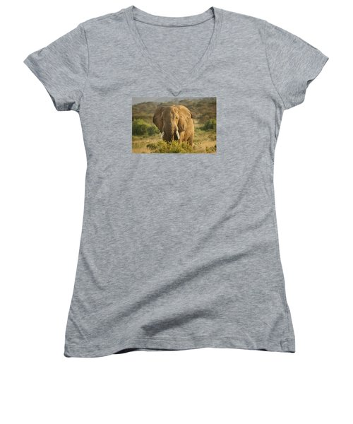 Women's V-Neck T-Shirt (Junior Cut) featuring the photograph Are You Looking At Me? by Gary Hall