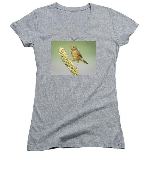 Baby Common Yellow Throat Warbler Women's V-Neck T-Shirt