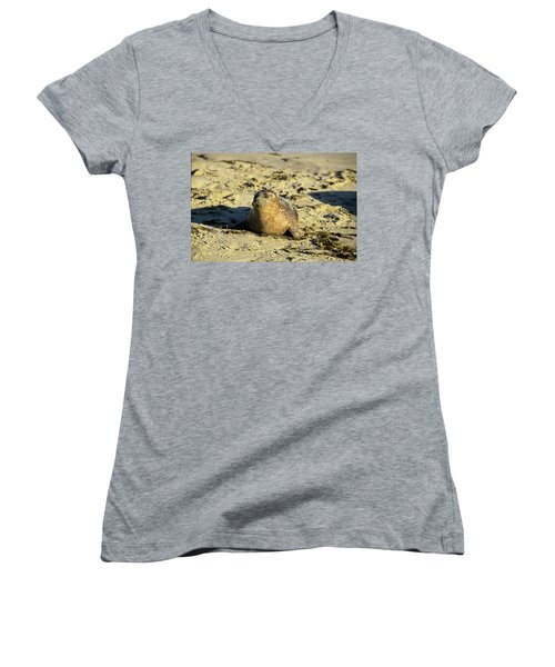 Baby Seal In Sand Women's V-Neck