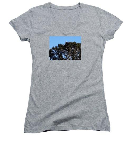 Bald Eagle In Juniper Women's V-Neck T-Shirt