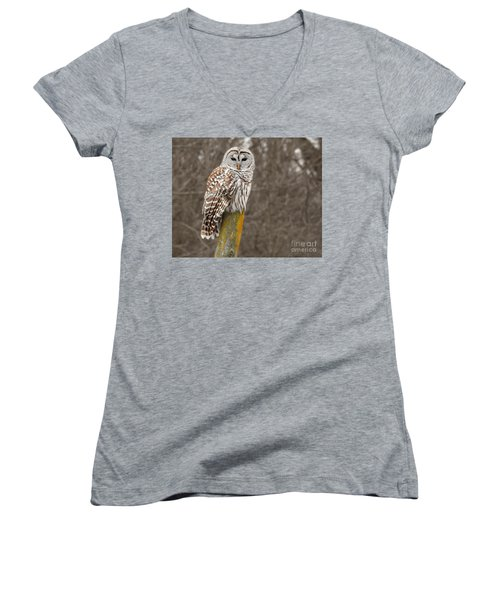 Barred Owl Women's V-Neck T-Shirt (Junior Cut) by Kathy M Krause