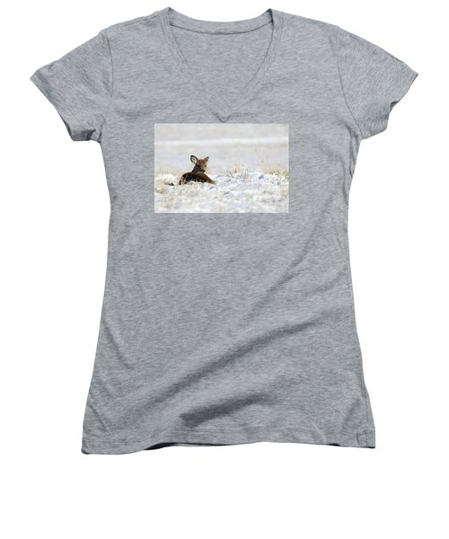 Bedded Fawn In Snowy Field Women's V-Neck T-Shirt (Junior Cut) by Brook Burling
