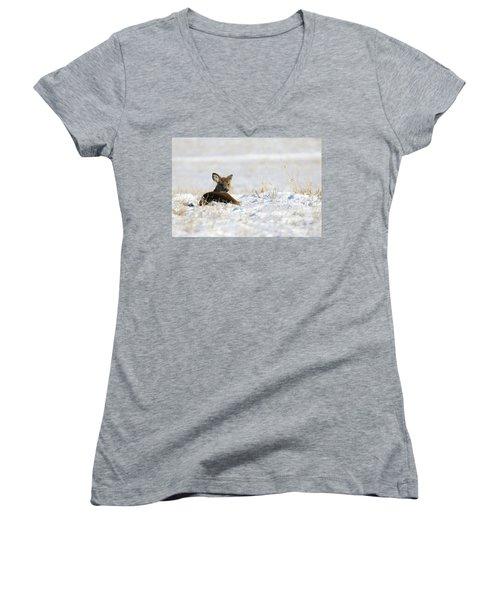 Bedded Fawn In Snowy Field Women's V-Neck T-Shirt