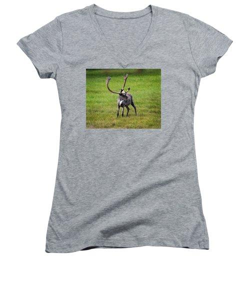 Big Horn Women's V-Neck T-Shirt (Junior Cut) by Anthony Jones