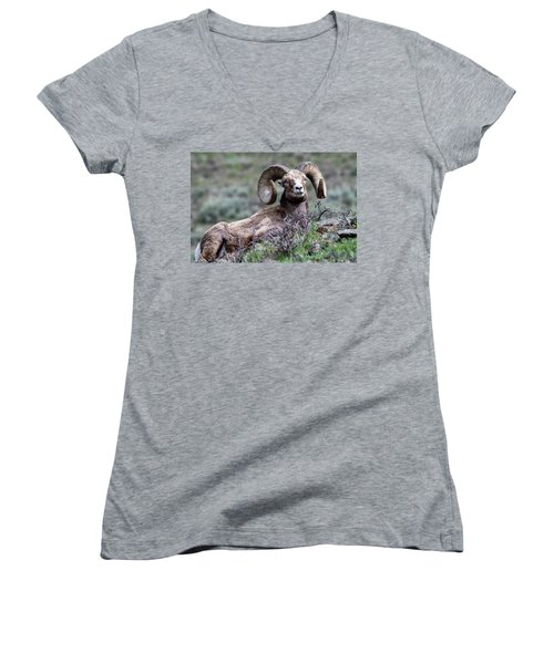 Women's V-Neck featuring the photograph Big Horn Sheep #3 by Scott Read