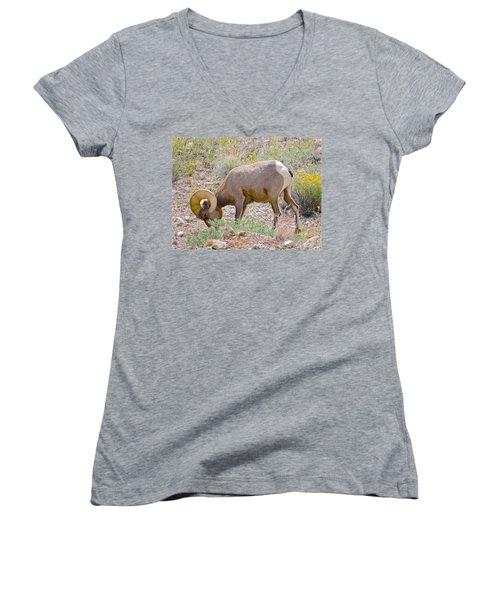 Big Horn Sheep Women's V-Neck T-Shirt