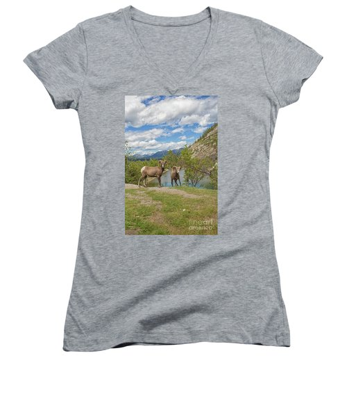 Bighorn Sheep In The Rocky Mountains Women's V-Neck T-Shirt (Junior Cut) by Patricia Hofmeester