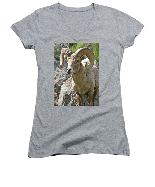 Bighorn Sheep Women's V-Neck