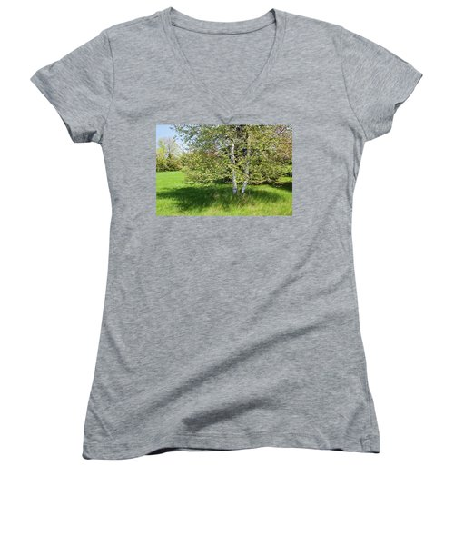 Birch Tree Women's V-Neck